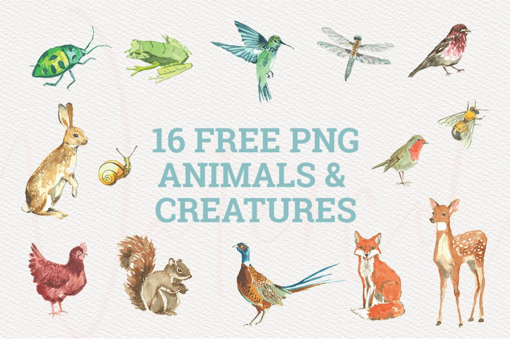 animals and creatures watercolor graphics collection